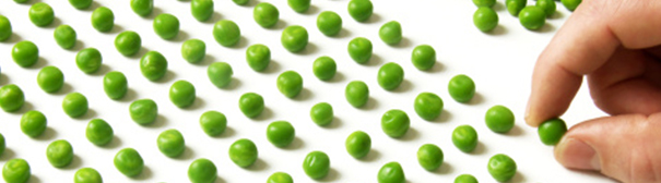 Photo: Peas in rows and columns