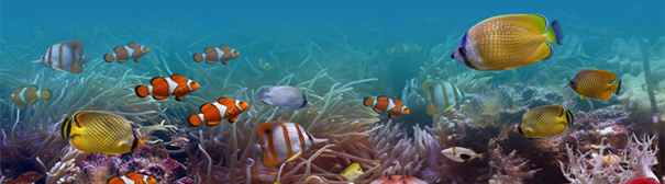 Photo of underwater fishes